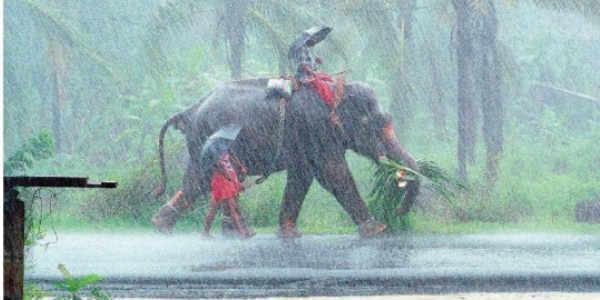 Heavy Pre Monsoon Rains Lash Kerala To Intensify Further