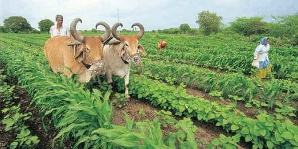 AGRI IN Gujarat