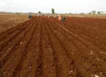 Andhra Kharif sowing
