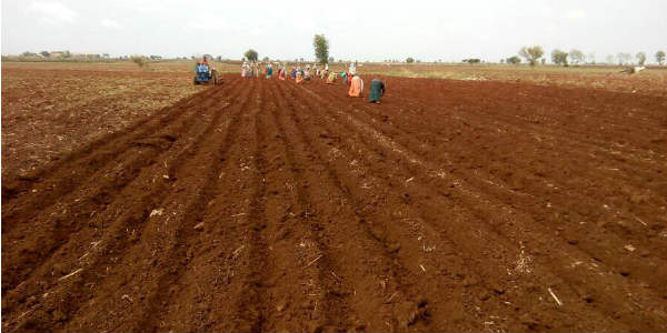Andhra Kharif sowing