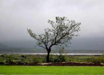 Gujarat-Rains-2