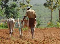 Marathwada farmer