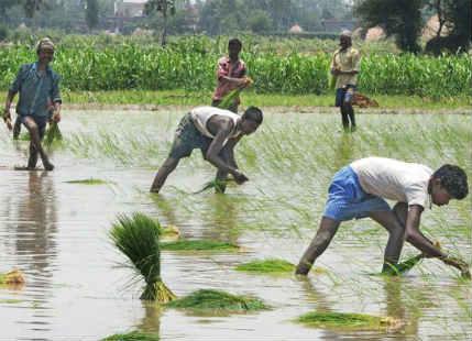 Monsoon rains and Paddy in Bihar