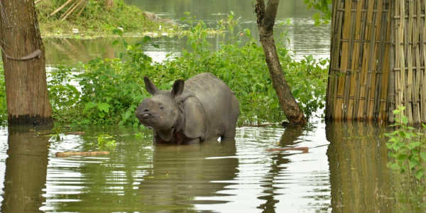 Over 300 animals dead in Kaziranga National Park after two successive Assam floods