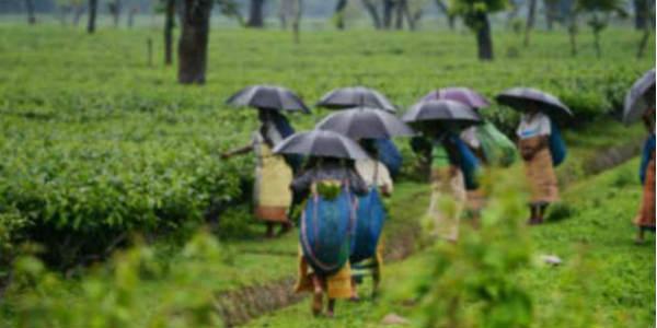 Heavy rains likely over Assam, Meghalaya, Sikkim