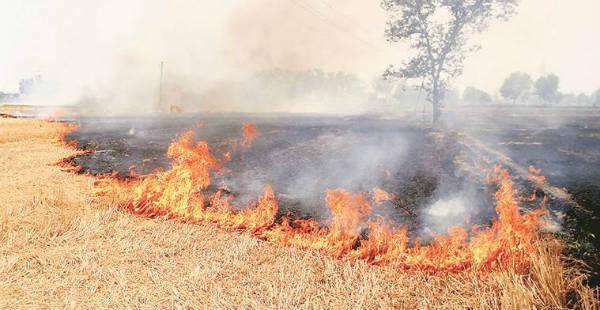 Punjab-stubble-buring-The Indian Express 600