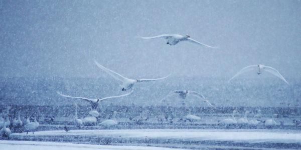 China Snow 4