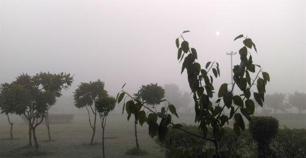 Fog in Punjab Fog in Haryana Smog in Delhi 600