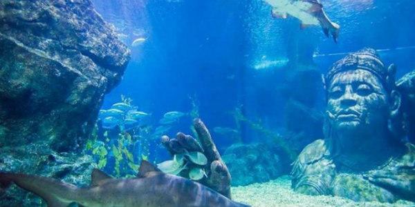 Image Credit: Bangkok Ocean World