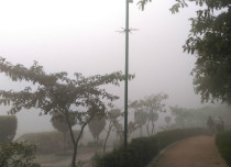 Delhi-fog-and-winter_Dev-429