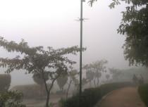Delhi-fog-and-winter_Dev-429