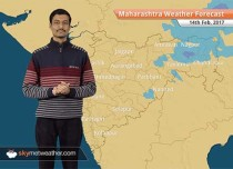 Maharashtra Weather Forecast for Feb 14: Unseasonal rains flatten crop in Vidarbha, Marathwada; dry weather to return by February 14