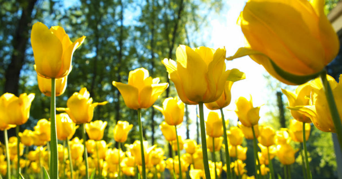 Five most common ailments of spring season skymet weather services mightylinksfo