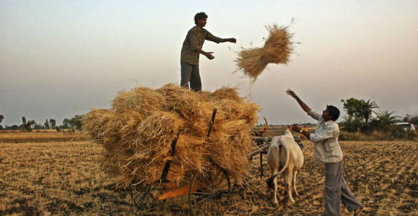 Wheat harvesting and pre-Monsoon rains in UP