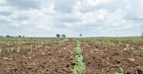Kharif Sowing in Madhya Pradesh