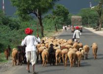 Rain in Rajasthan