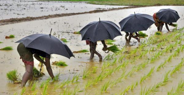 Normal Monsoon rain