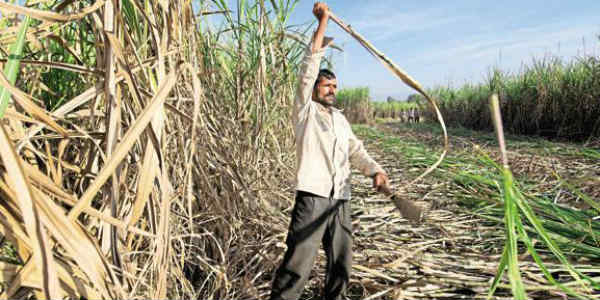 sugarcane website
