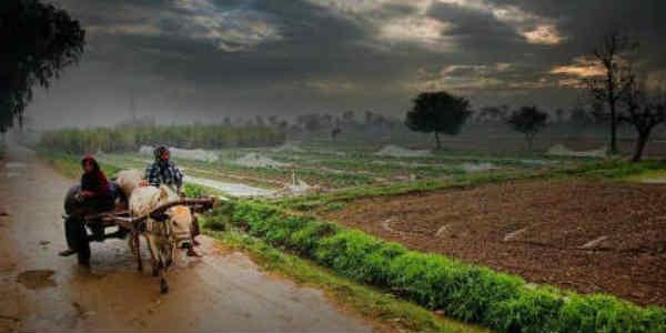 Punjab-in-rain website
