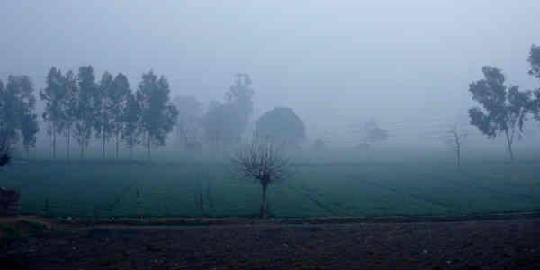 punjab plains website