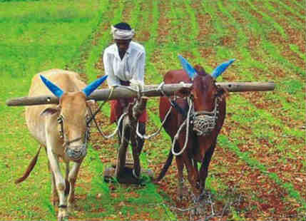 Agriculture and Union Budget