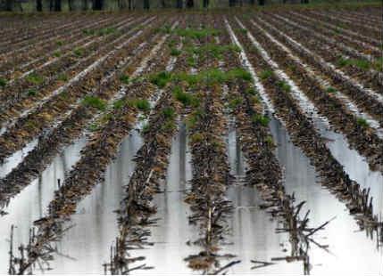 Crop loss in Maharashtra
