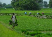 Almost 75 percent of Kharif crops below minimum support price