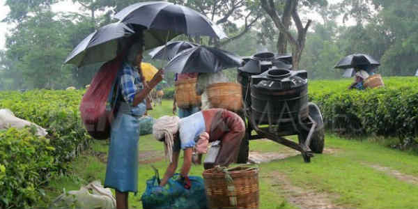 Rain in Northeast India