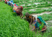 Agriculture and Union budget 2019 featured