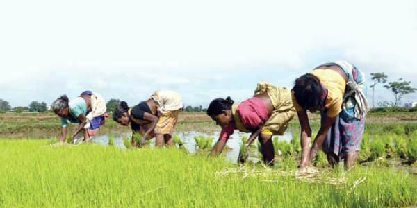 Budget 2019 Agriculture