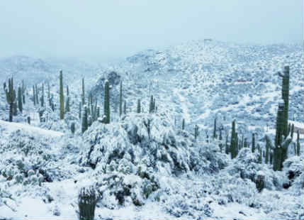 Snowstorm in Arizona