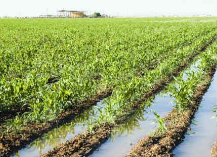 Crop Damage in Madhya Pradesh