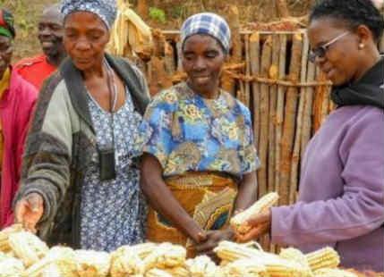 Agricultural Development in Zambia