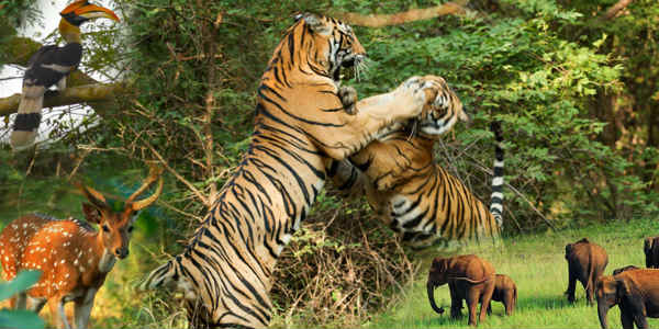 Forest Fires, insufficient plantation model, biggest threat to Indian Wildlife