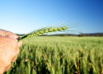 Rural Credit Growth