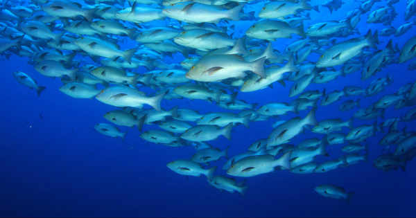 Climate change affected fisheries globally
