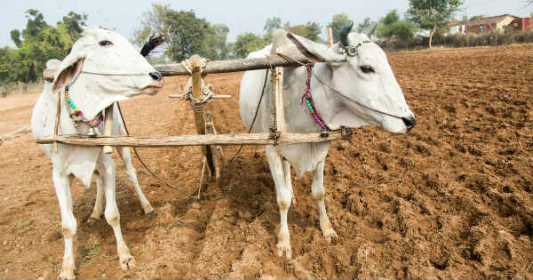 Lok Sabha Elections and Farmers