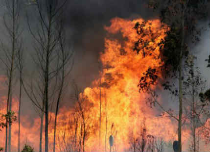Climate Change and Forest Wildfire