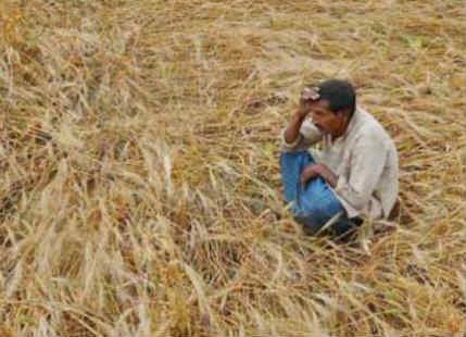 Crop Damage in Gujarat