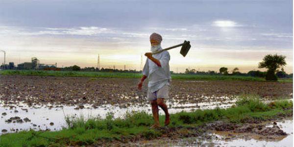 Uttar Pradesh farm