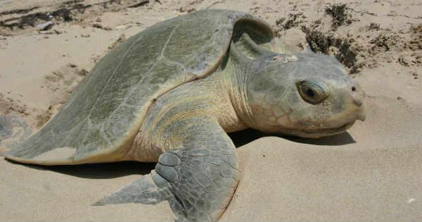 Beach Sea Turtle