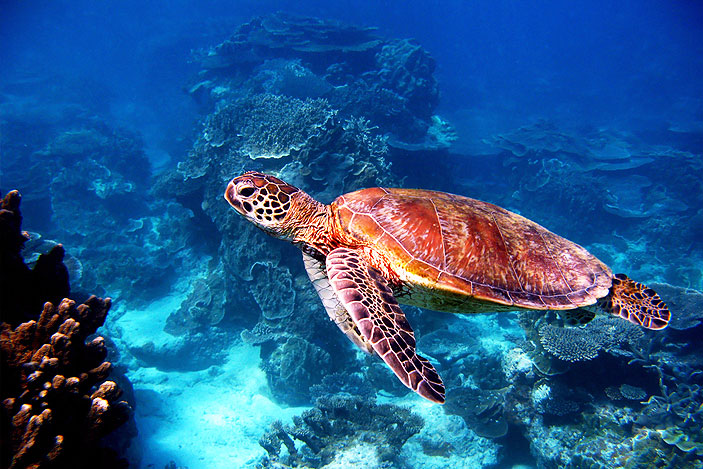 Where-To-See-Turtles-In-Australia