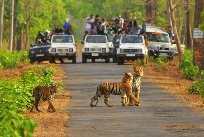sariska-national-park-jeep-safari