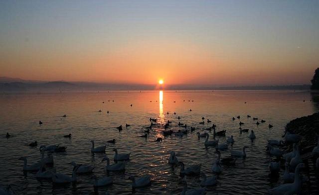 sukhna-lake-sunrise