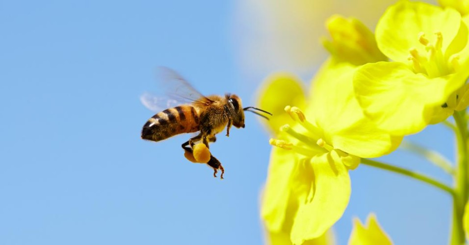 why_we_need_bees_1200x627