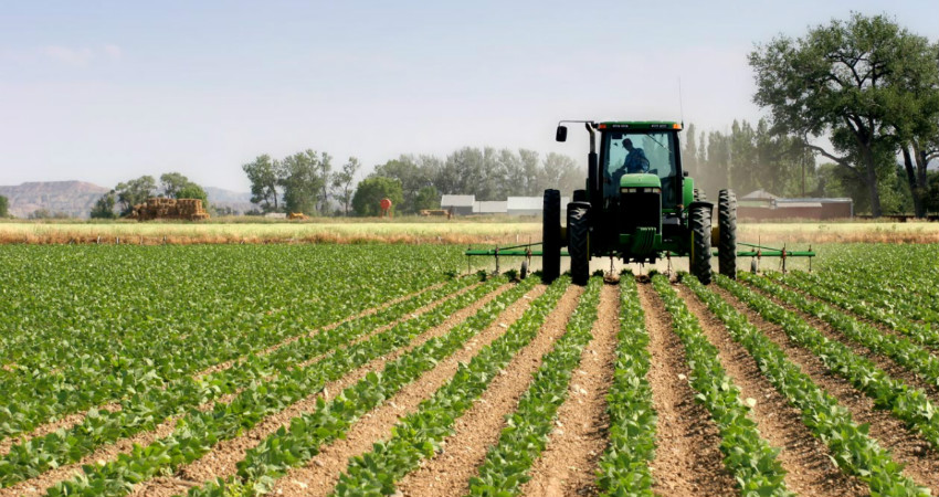 Agriculture and SDG