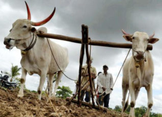 Farmers are advised to delay kharif sowing