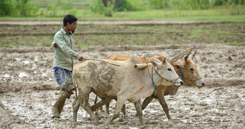 Kharif Sowing In India