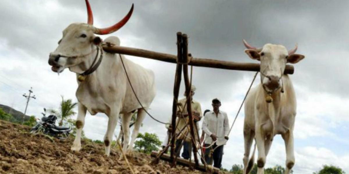 Maharashtra crop advisory