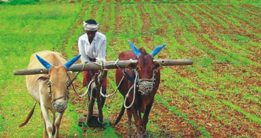 Monsoon and agriculture